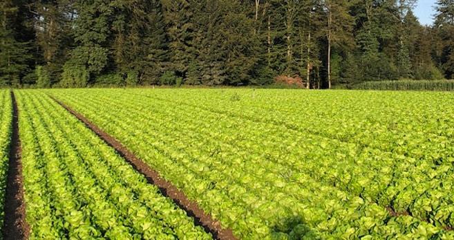 Bei Beat Bösiger wächst das Gemüse vollautomatisch